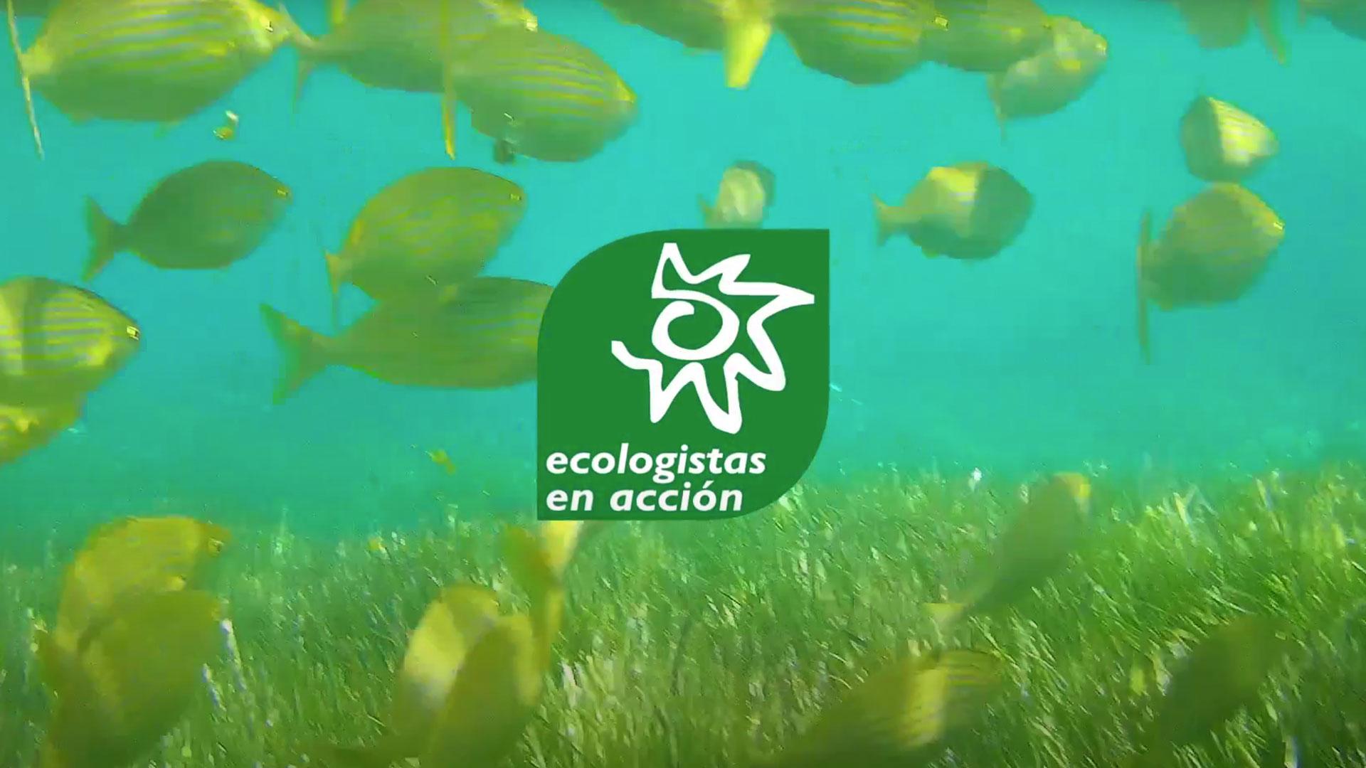 Puntos clave de la Política Pesquera Común para acabar con la sobrepesca